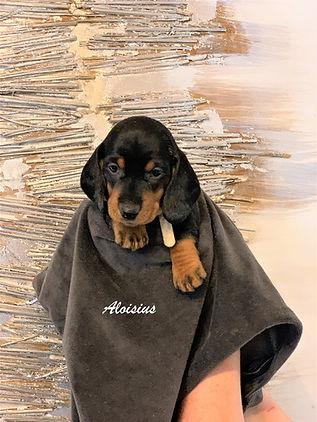 Aloisius.jpg