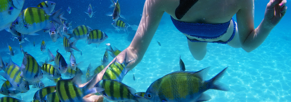 snorkeler-with-fish.jpg