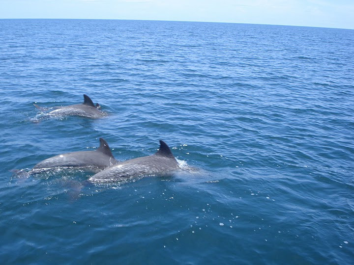 3-dolphins.jpg