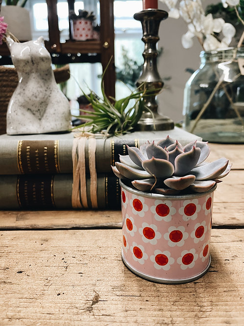 Y Pink Potted Succulent