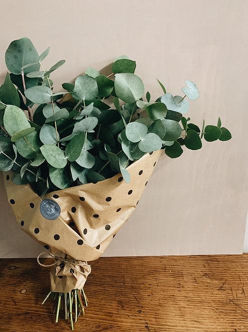 Cineraria Eucalyptus Bunch