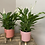 Thumbnail: Potted Peace Lily