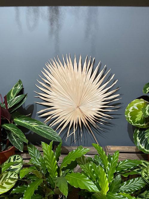 Dried Fan Palm - Neutral
