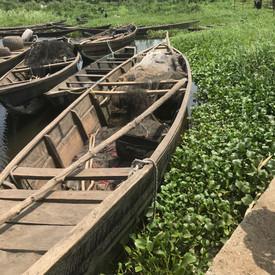 Water Hyacinth Infestation.jpg