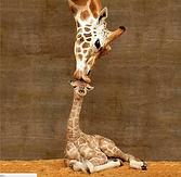 Giraffe Motherly Love.png