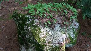 04 La forêt.png