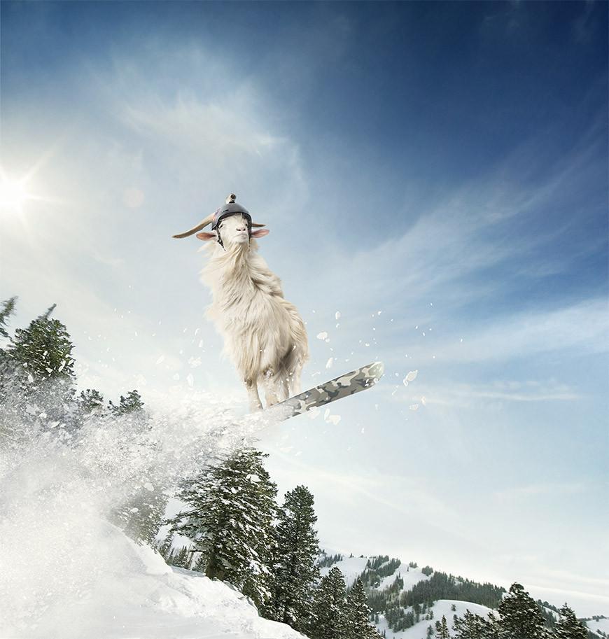 TomTom - Goat