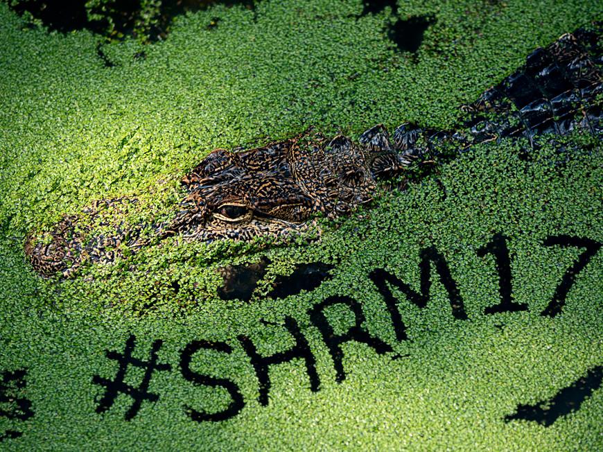 SHRM 2017 Campaign