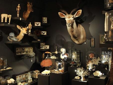 Mettre en scène un cabinet de curiosités chez soi.