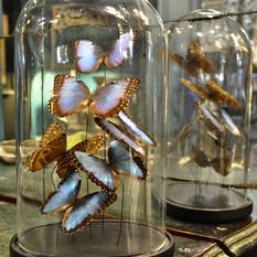 Décoration papillons