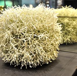 Décoration boule lichen