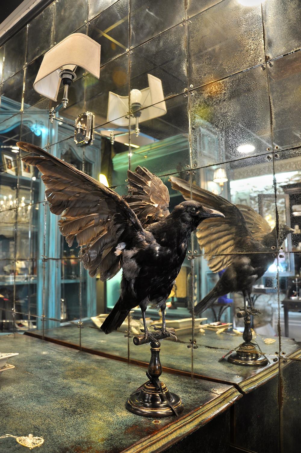 décoration cabinet de curiosités corbeau