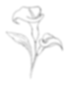 Calla Lelie staat voor zuiverheid, sympathie, schoonheid en geluk