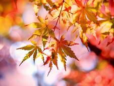 Fall...Hopefully!