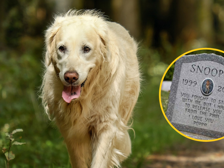 Malta Introduces First Ever Pet Cemetery