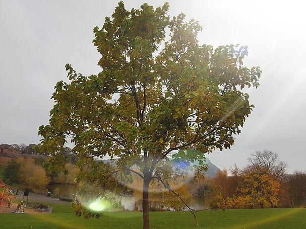 Lens flare tree.jpg