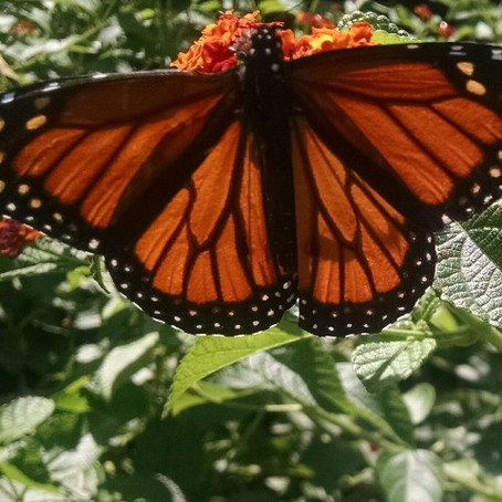 What's the Scoop? God's Created Orange Butterfly