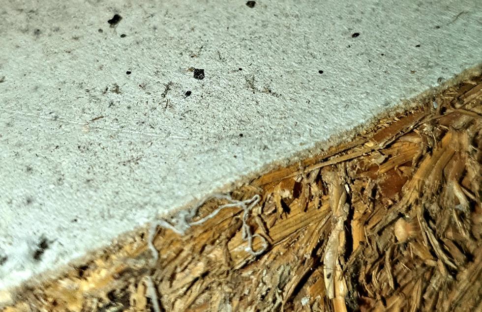 Asbestos Paper.jpg
