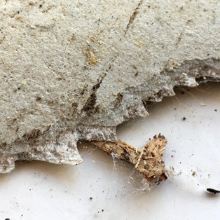 Asbestos paper backing on Vinyl flooring