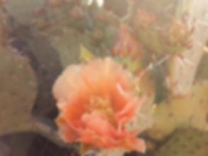 prickly pear_edited.jpg