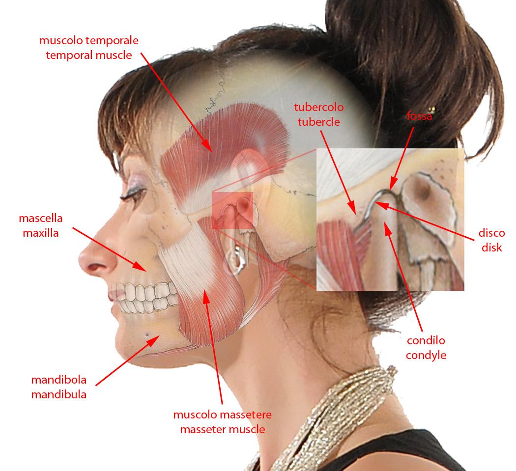 Anatomia Articolazione Temporo Mandibolare