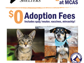 Clear the Shelters! Saturday, August 19!