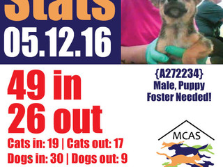 MCAS Intakes & Daily Stats - 05.12.16 - 49 pets in, 26 pets out