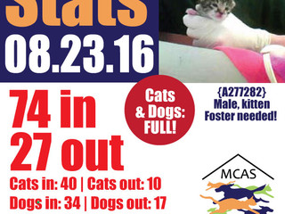 MCAS Intakes & Daily Stats - 08.23.16 - 74 pets in, 27 pets out