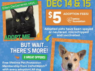 Adopt a Pet for $5 this Weekend!