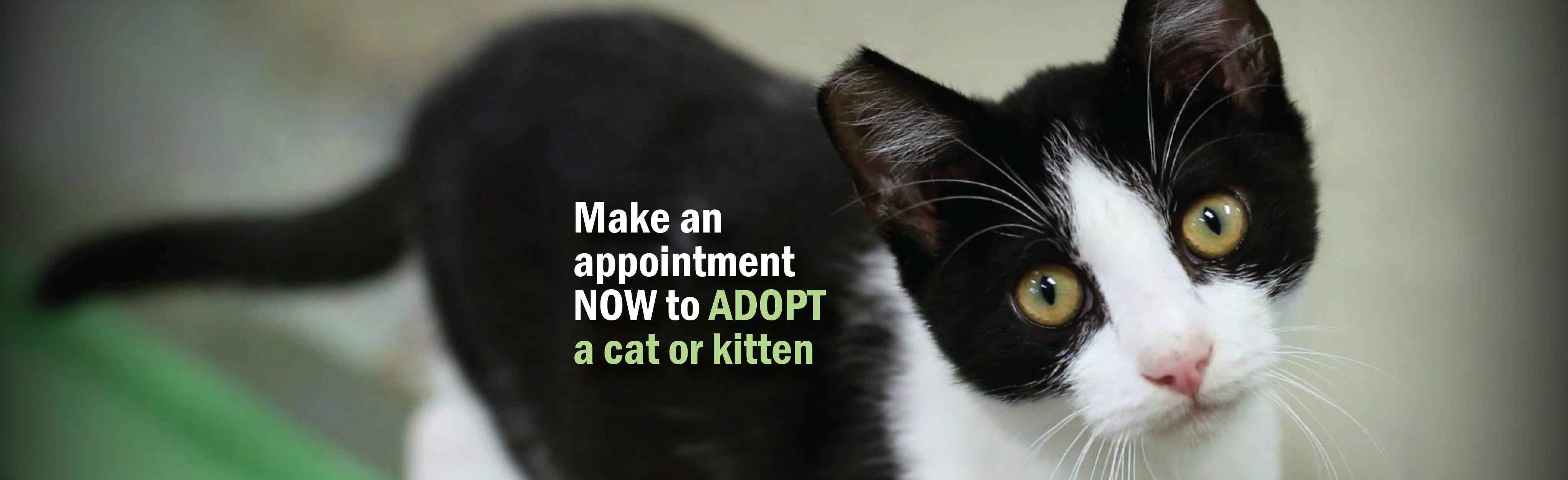 Header-Adopt a Cat-01