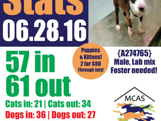 MCAS Intakes & Daily Stats - 06.28.16 - 57 pets in, 61 pets out