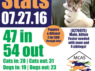 MCAS Intakes & Daily Stats - 07.27.16 - 47 pets in, 54 pets out