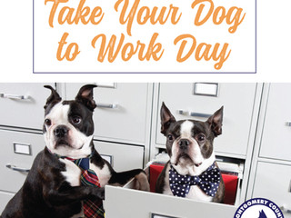 Take your dog to work day 2018