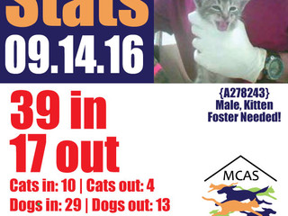 MCAS Intakes & Daily Stats - 09.14.16 - 39 pets in, 17 pets out