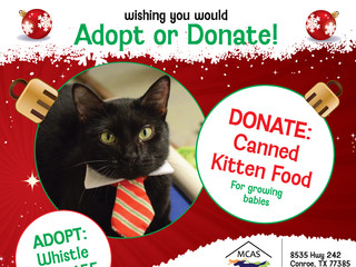 12 Pet Wishes of Christmas! DAY 8: Our homeless pets are wishing you would adopt or donate this holi