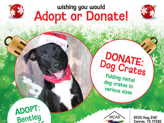 12 Pet Wishes of Christmas! DAY 1: Our homeless pets are wishing you would adopt or donate this holi