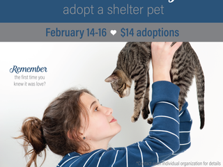 Start a Love Story - Adopt a Shelter Pet