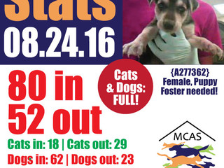 MCAS Intakes & Daily Stats - 08.24.16 - 80 pets in, 52 pets out