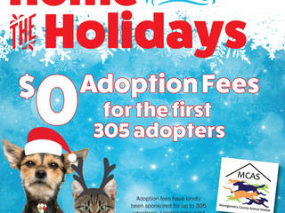 Home for the Holidays: $0 Adoption fees for the first 305 adopters!