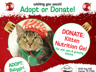 12 Pet Wishes of Christmas! DAY 10: Our homeless pets are wishing you would adopt or donate this hol