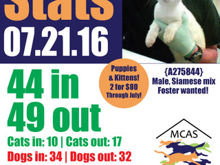 MCAS Intakes & Daily Stats - 07.21.16 - 44 pets in, 49 pets out