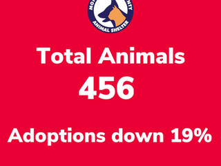 Adoptions are down. Will you help?