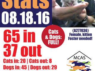 MCAS Intakes & Daily Stats - 08.18.16 - 65 pets in, 37 pets out
