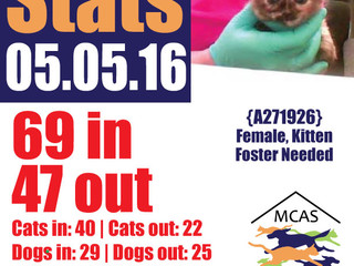 MCAS Intakes & Daily Stats - 05.05.16 - 69 pets in, 47 pets out