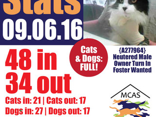 MCAS Intakes & Daily Stats - 09.06.16 - 48 pets in, 34 pets out