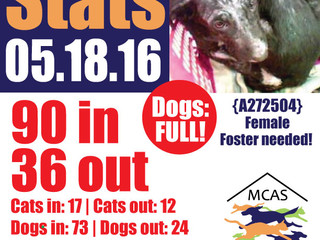 MCAS Intakes & Daily Stats - 05.18.16 - 90 pets in, 36 pets out