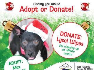 12 Pet Wishes of Christmas! DAY 9: Our homeless pets are wishing you would adopt or donate this holi