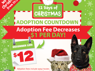 12 Days of Christmas Adoption Countdown!