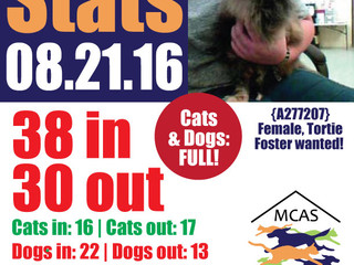 MCAS Intakes & Daily Stats - 08.21.16 - 38 pets in, 30 pets out