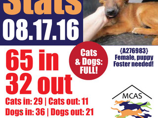 MCAS Intakes & Daily Stats - 08.17.16 - 65 pets in, 32 pets out